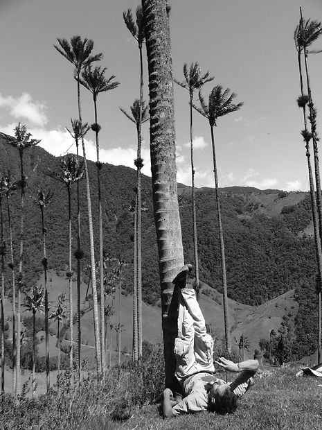 The world's tallest palm trees at Valle de Cocora in Colombia in black and white