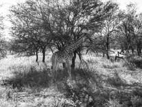 Krüger National Park / South Africa · 2017
