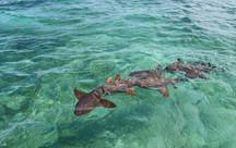 Shark Ray Alley, Caye Caulker / Belize