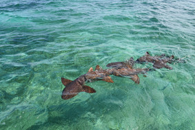 Shark Ray Alley, Caye Caulker / Belize
