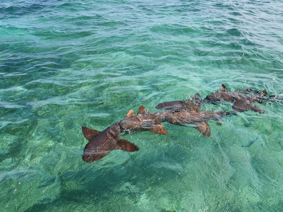 Shark-Ray-Alley, Caye Caulker / Belize · 2014