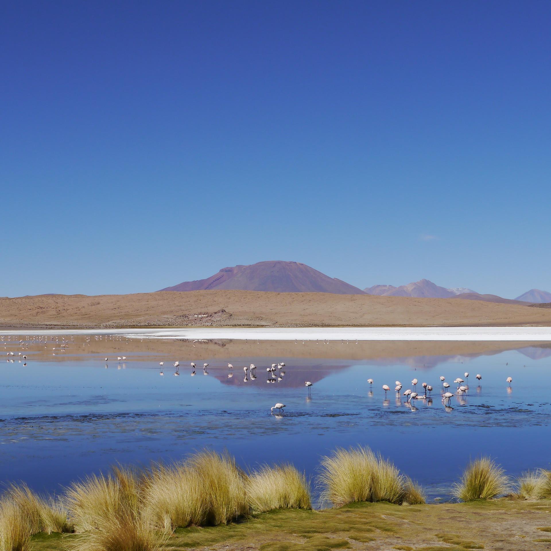 Altiplano / Bolivia · 2014