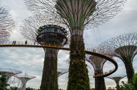 Supertree Grove, Gardens by the Bay / Singapore · 2016