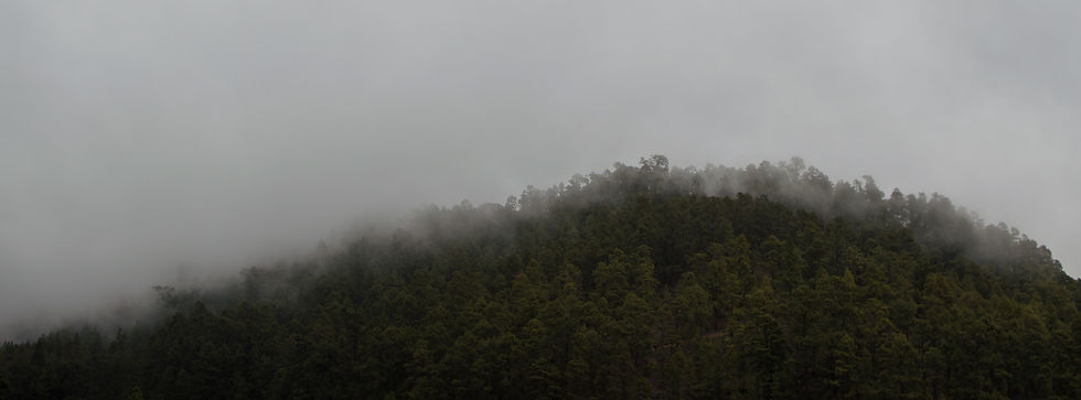Forest and mist in Tenerife, Spain