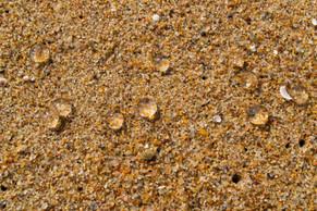 Serenity Beach, Tamil Nadu / India