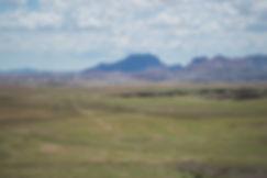 Green grass in the Namibian desert after rain