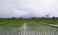 Cianjur, Java / Indonesia