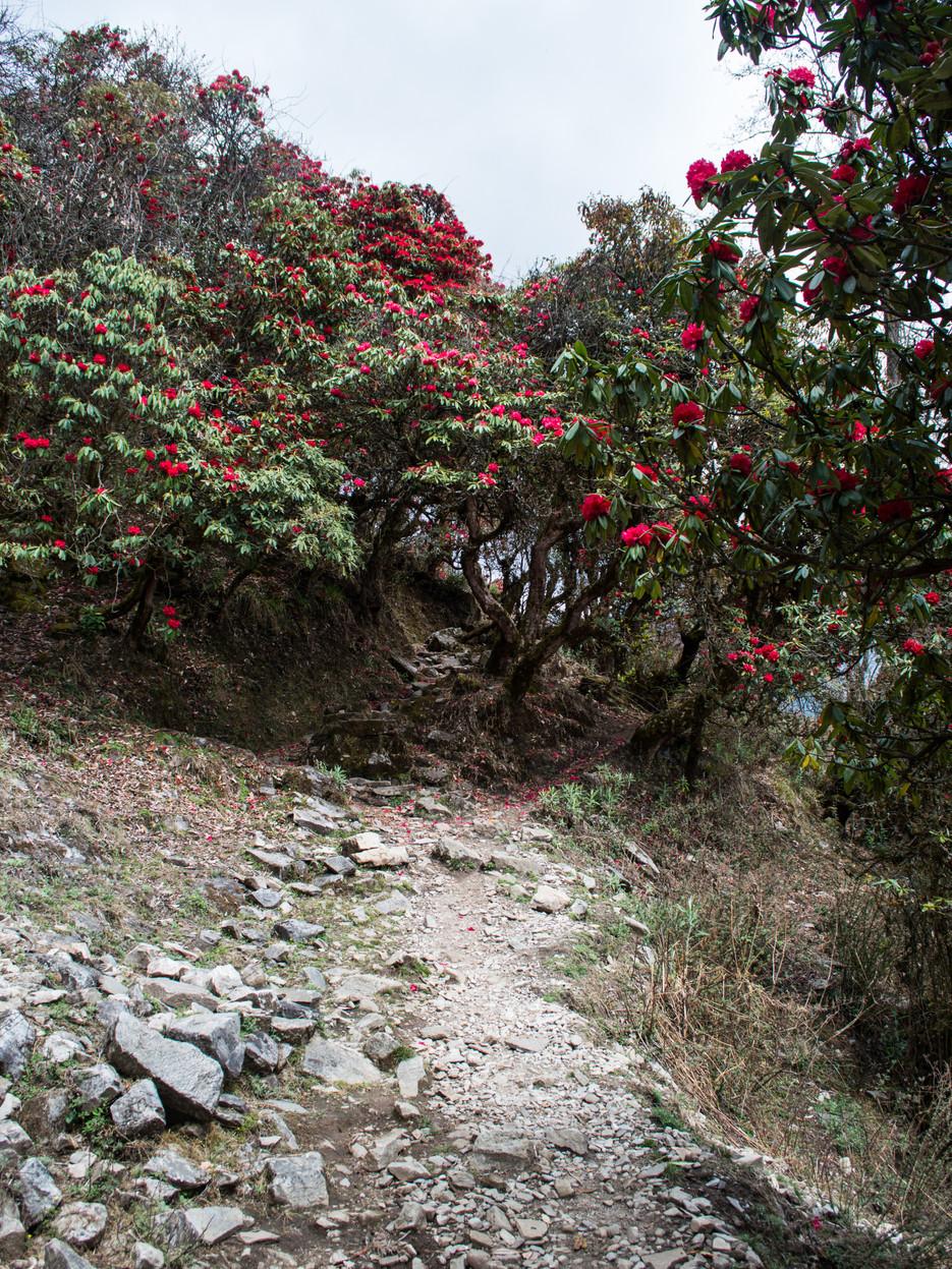 Dakachu, Himalayas / Nepal · 2015
