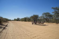Mantshwabisi / Botswana