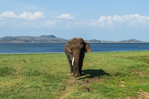 Minneriya National Park / Sri Lanka · 2015