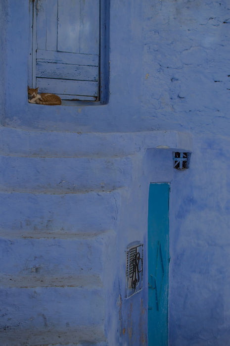 a cat on blue stairs in Chefchaouen, Morocco