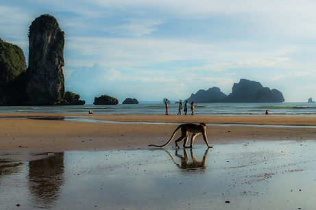 Monkey and lime stone formations at Ao Nang Beach in Thailand's Krabi region