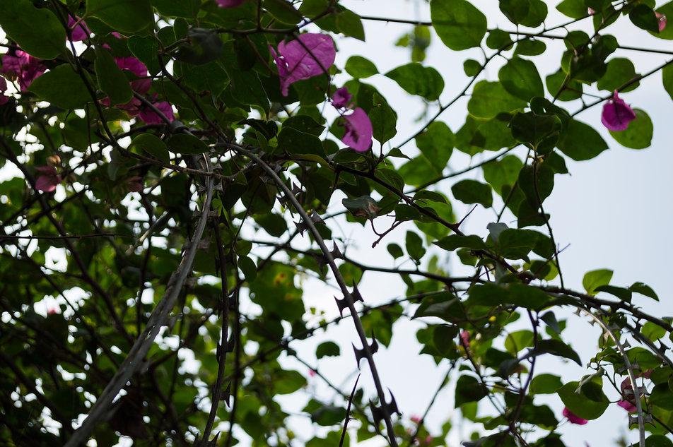 Twigs, flowers and barbed wite in Gisenyi, Rwanda