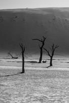 Deadvlei / Namibia · 2017