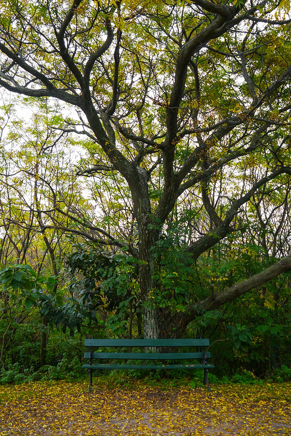 bench and autumn foliage