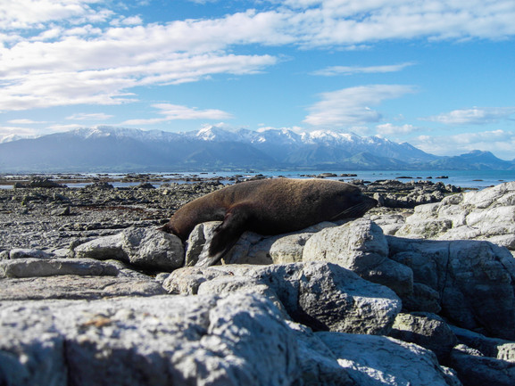 Kaikoura / New Zealand