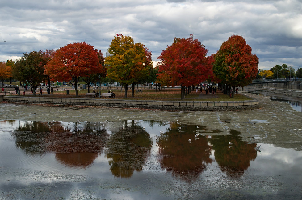 Autumn foliage at the Old Port of Montreal, Canada
