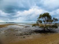 Fraser Island / Australia