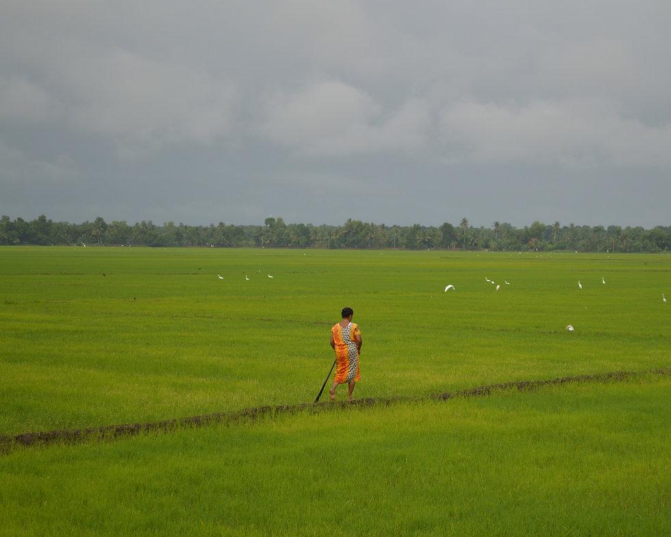 Woman walking through rice paddies in Kerala, India