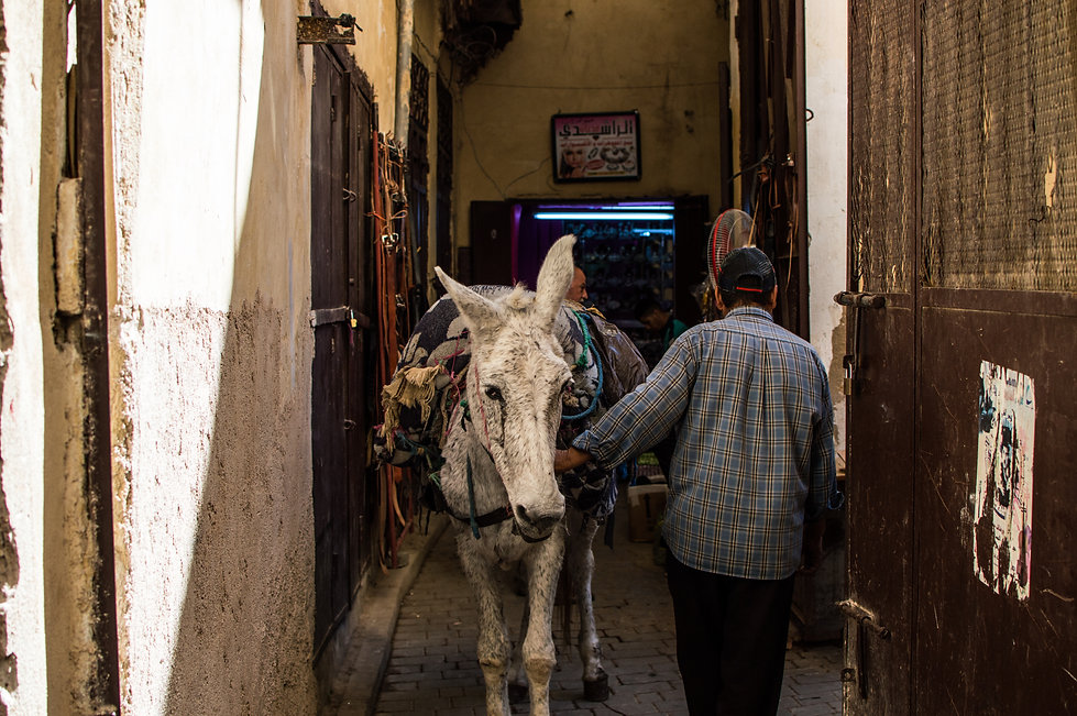 a donkey in the medina of Fes in Morocco