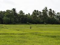 Trincomalee / Sri Lanka · 2015