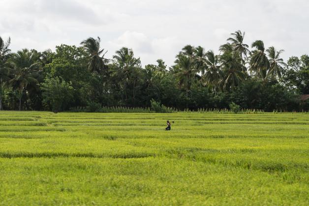 Trincomalee / Sri Lanka