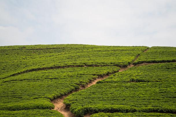 Countryside / Rwanda