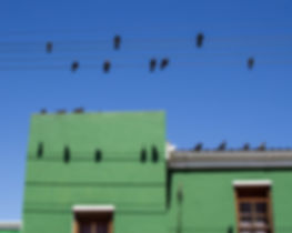 colorful house with birds in Cape Towns Bo-Kaap quarter