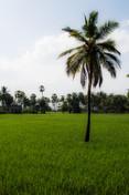 countryside, Tamil Nadu / India