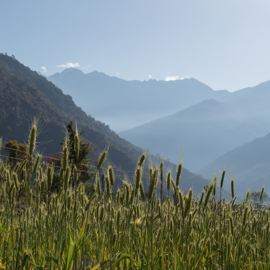 Bhandar, Himalayas / Nepal · 2015
