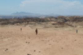 Welwitschia plains near Sawkopmund, Namibia