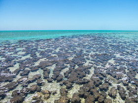 Stromatolites, Shark Bay / Australia