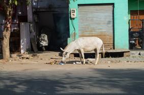 Agra, Uttar Pradesh / India