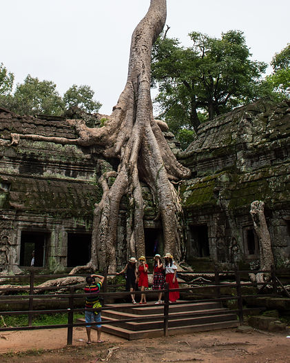 Tree growing on temple at Ta Prohm in Cambodia's Angkor region