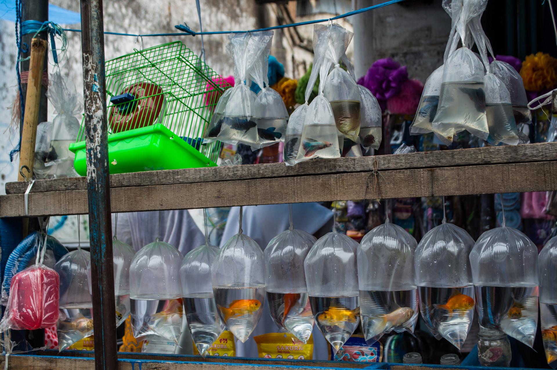 Cianjur / Indonesia · 2015