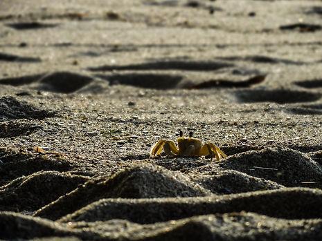 crab at Tayrona National Park in Colombia