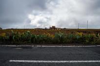 near Arona, Tenerife / Spain