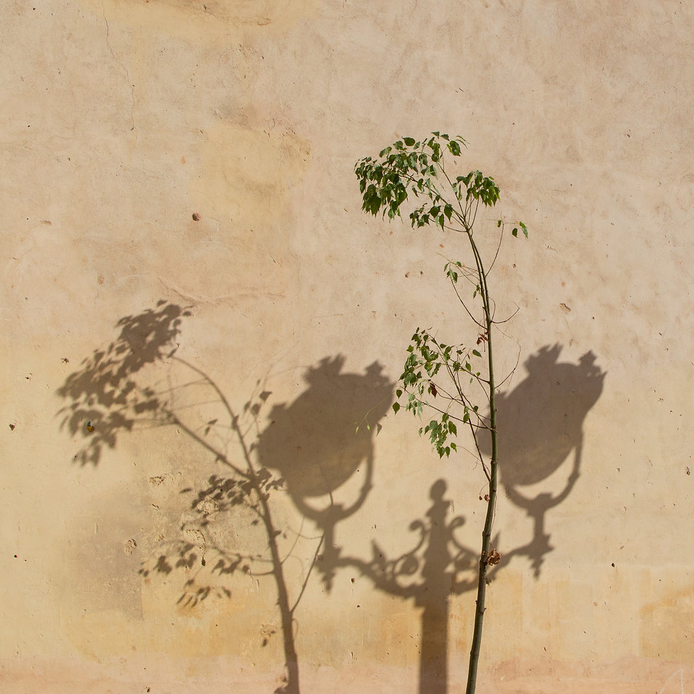 shadows on a wall in the medina of Fes, Morocco