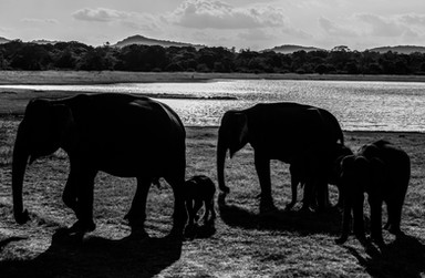 Minneriya National Park / Sri Lanka