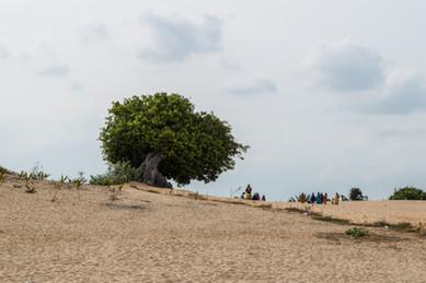 Sri Lanka · 2015