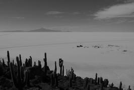 Isla Incahuasi, Salar de Uyuni / Bolivia · 2014
