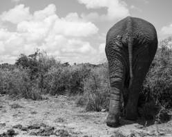 Addo Elephant Park / South Africa · 2017