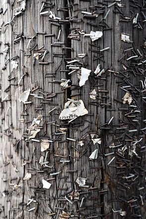 stapler needles on a utility post