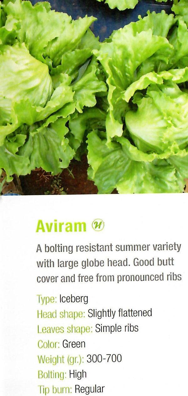 Lettuce Aviram.jpg