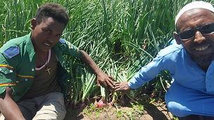Onion Ethiopia (2).jpg