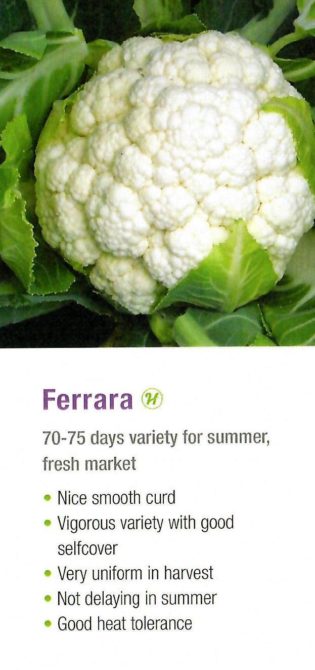 Cauliflower Ferrara.jpg
