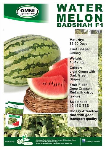 Watermelon BADSHAH F1.jpg