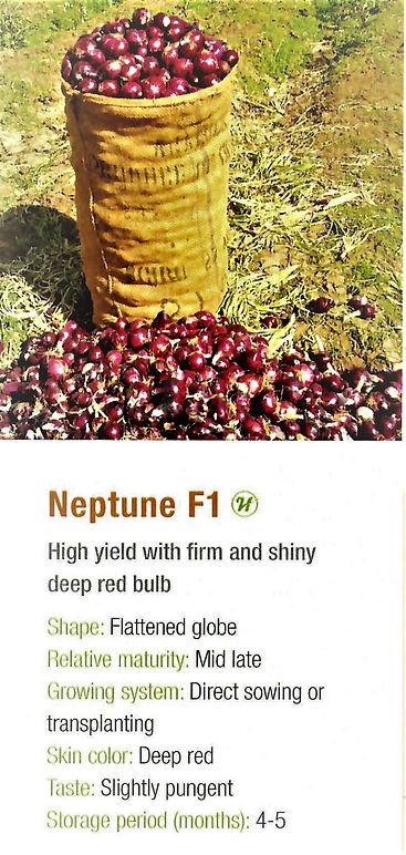 Onion Neptune.jpg