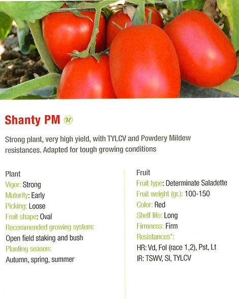 Tomato ShantyPM.jpg