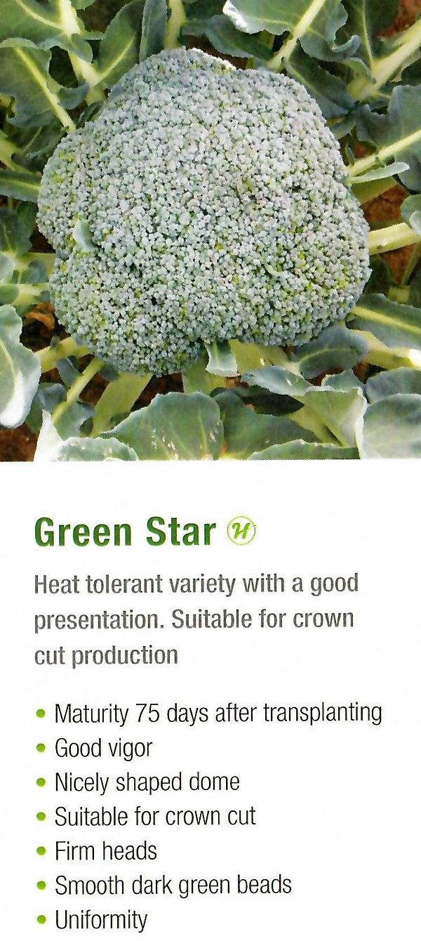 Broccoli Green Star.jpg